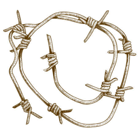 barbed wire isolated: Vector antique engraving illustration of barbed wire piece isolated on white background Illustration