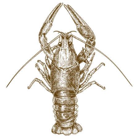 antique engraving illustration of crayfish isolated on white background Çizim