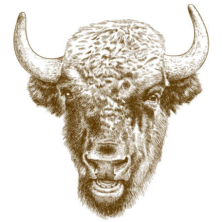 Vector antique engraving illustration of bison head Çizim