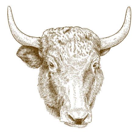 Vector antique engraving illustration of yak head Vetores