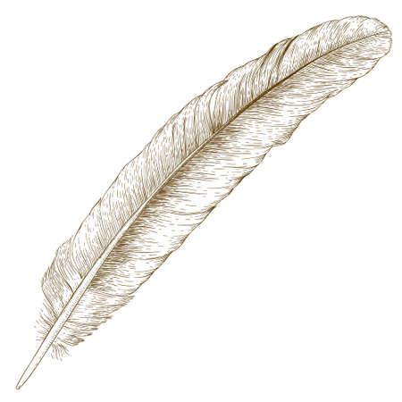 ベクトル アンティークの白い背景で隔離の羽のイラストを彫刻  イラスト・ベクター素材