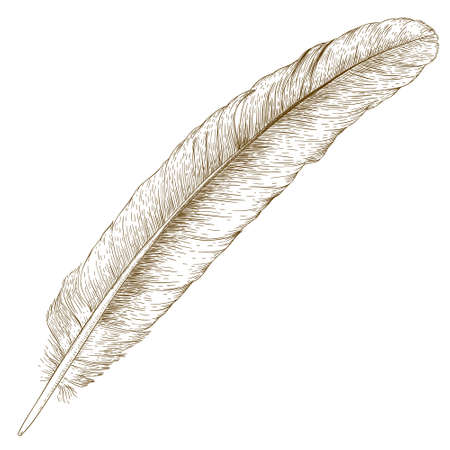 Vector antique engraving illustration of feather isolated on white background