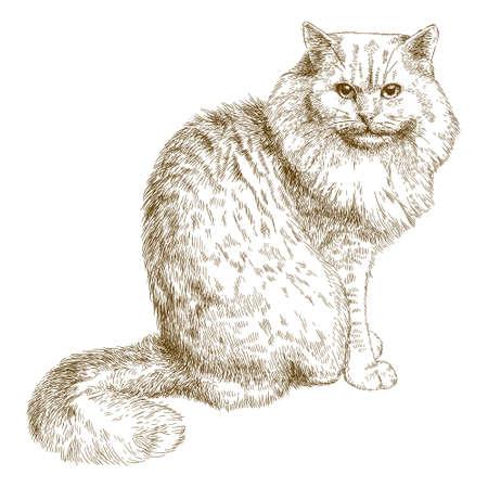 ベクトル アンティークの彫刻の白い背景で隔離の大きな猫のイラスト  イラスト・ベクター素材