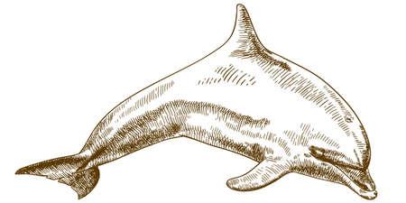 Vector antieke gravure illustratie van springen dolfijn geïsoleerd op een witte achtergrond Stock Illustratie