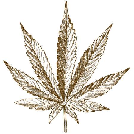白い背景に隔離された大麻の葉のベクトルアンティーク彫刻イラスト  イラスト・ベクター素材