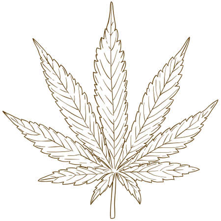Vector antique engraving drawing illustration of cannabis leaf isolated on white background  イラスト・ベクター素材