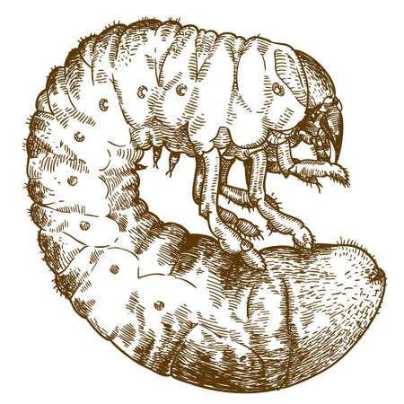 白い背景に隔離された幼虫のベクトルアンティーク彫刻図