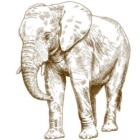 Antieke gravure tekening vectorillustratie van grote olifant geïsoleerd op een witte achtergrond. Vector Illustratie