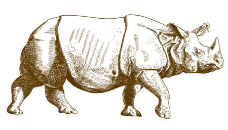 Antique engraving drawing vector illustration of rhino isolated on white background.