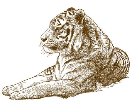 Ilustración de imagen de tigre de Amur Ilustración de vector