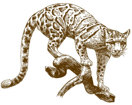 Leopard outline image illustration