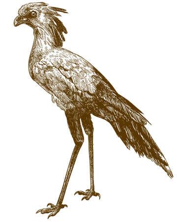 Secretary bird image illustration