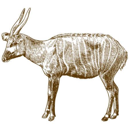 Bongo antelope outline image illustration Vettoriali