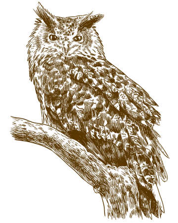 A Vector antique engraving drawing illustration of eagle owl isolated on white background