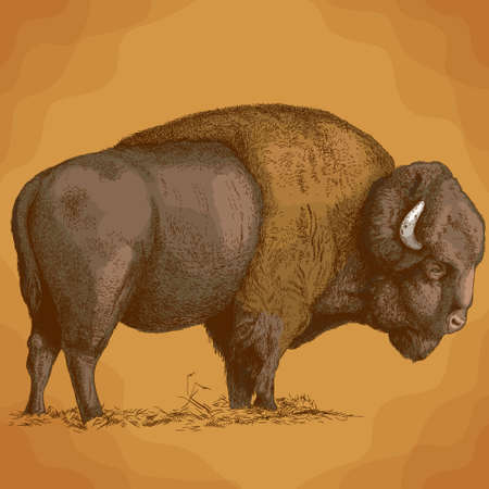 Vector antique engraving illustration of bison in retro style
