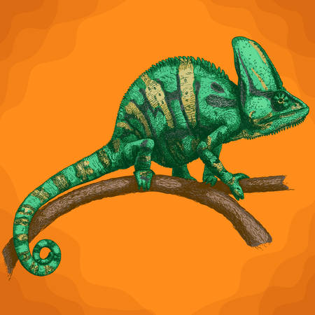 Vector antique engraving illustration of chameleon in retro style