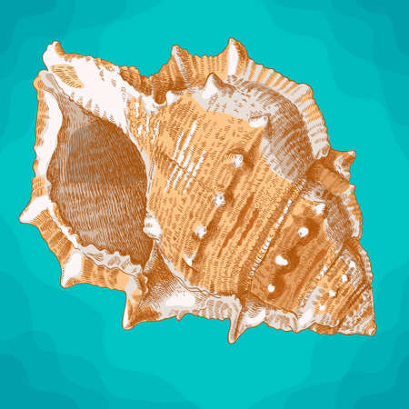 Vector antique engraving illustration of  spiral seashell in retro style