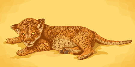 Vector antique engraving illustration of lion cub in retro style Illustration