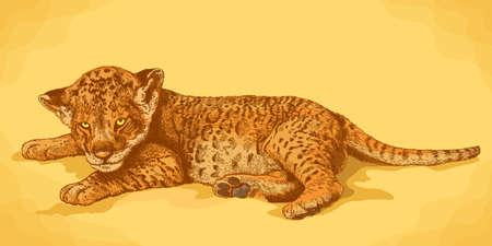 Vector antique engraving illustration of lion cub in retro style Ilustração