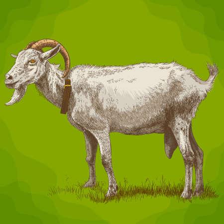 Vector antique engraving illustration of goat in retro style
