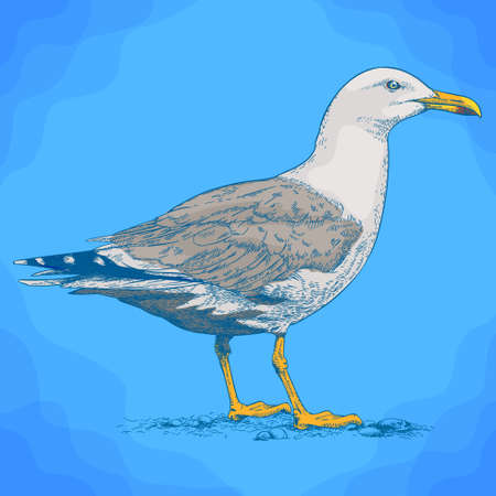Vector antique engraving illustration of gull in retro style