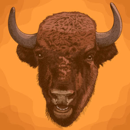 Vector antique engraving illustration of bison head in retro style Ilustração