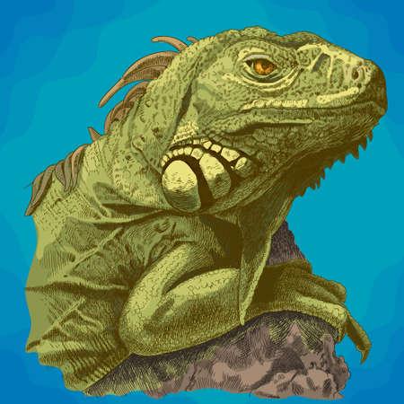 Vector antique engraving illustration of iguana head in retro style