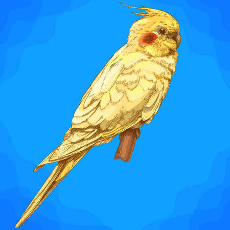 Vector antique engraving illustration of cockatiel in retro style Illustration