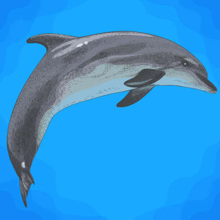 Vector antique engraving illustration of dolphin in retro style