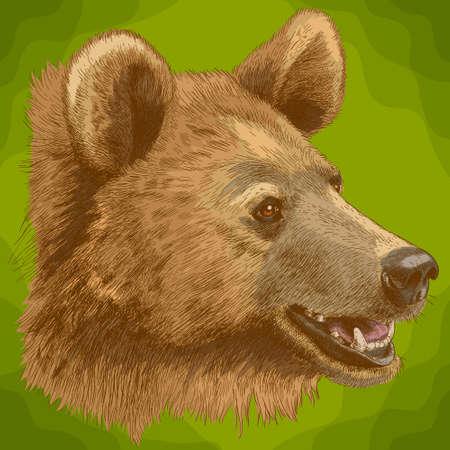 Vector antique engraving illustration of  bear head in retro style Illustration