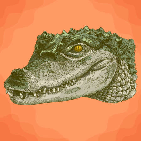 Vector antique engraving illustration of crocodile head in retro style Vectores