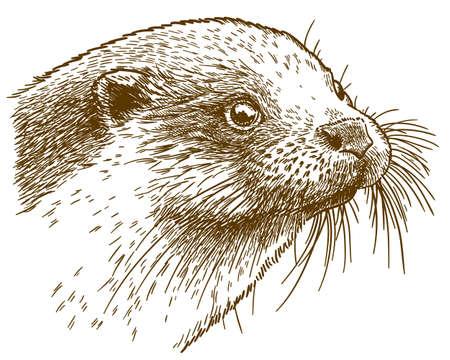 Antica incisione di vettore illustrazione della testa di lontra isolati su sfondo bianco