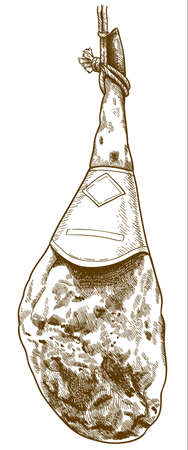 Vector antique engraving illustration of jamon or hamon serrano isolated on white background 向量圖像