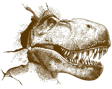 Vector antique engraving drawing illustration of tyrannosaurus T rex isolated on white background Иллюстрация
