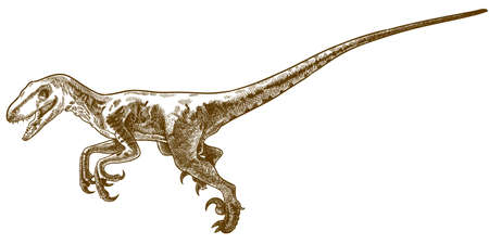 Vector antique engraving drawing illustration of deinonychus antirrhopus isolated on white background