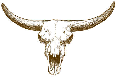 Vector antique engraving drawing illustration of steppe bison skull isolated on white background Illustration