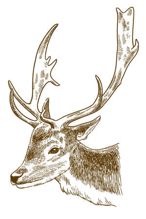 Vector antique engraving drawing illustration of spotted deer or cheetal head isolated on white background