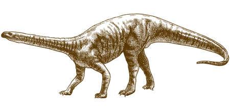 Vector antique engraving drawing illustration of plateosaurus engelhardti skeleton isolated on white background