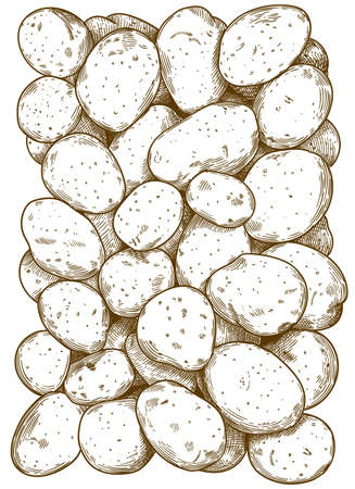 Vector antique engraving illustration of potatoes pattern isolated on white background