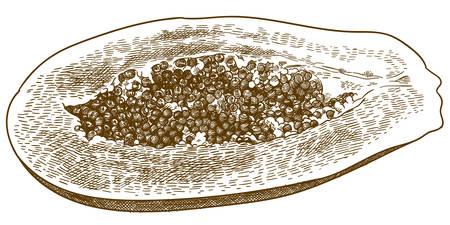 Vector antique engraving drawing illustration of half papaya fruit isolated on white background 向量圖像