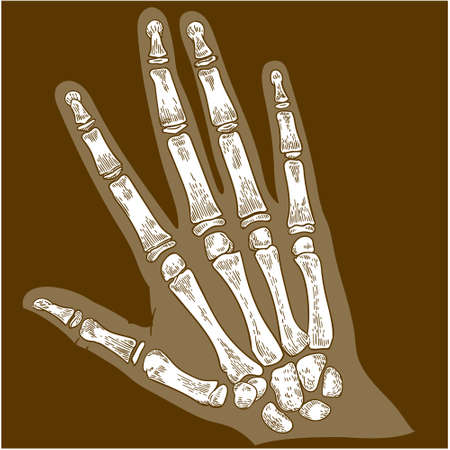 Vector antique engraving drawing illustration of hand bone x-ray isolated