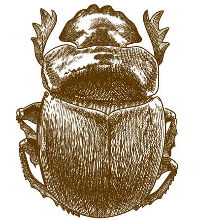 Vector antique engraving drawing illustration of sacred scarab isolated on white background