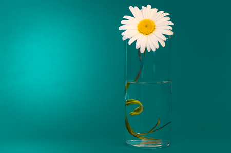 On a green background, a glass of chamomile, left place for the inscription.