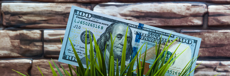 A hundred dollar bill in grass on a brick wall background. The concept of environmental protection Stok Fotoğraf