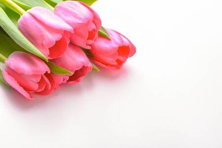 Boeket van verse roze tulpen op een witte achtergrond, isolated