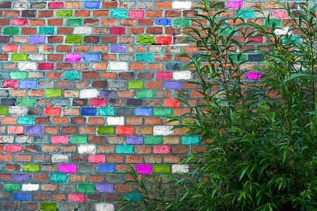 A Bush with bright green leaves grows against a high wall of multicolored bricks.