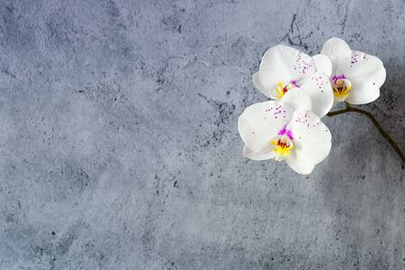 Orchid flowers on a branch against a stucco wall, free space, mockup.