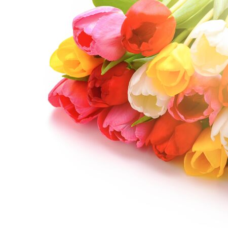 Bouquet of fresh, bright, multi-colored tulips on a white background, isolated