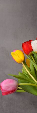 A bouquet of fresh, bright, multi-colored tulips on a gray background
