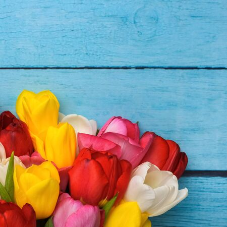 Bright bouquet of multi-colored tulips close-up on wooden boards of blue color